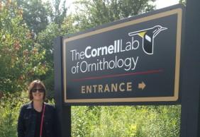 Erin Cornell Lab 2