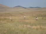 "Pronghorn antelope aka ""speed goats"""